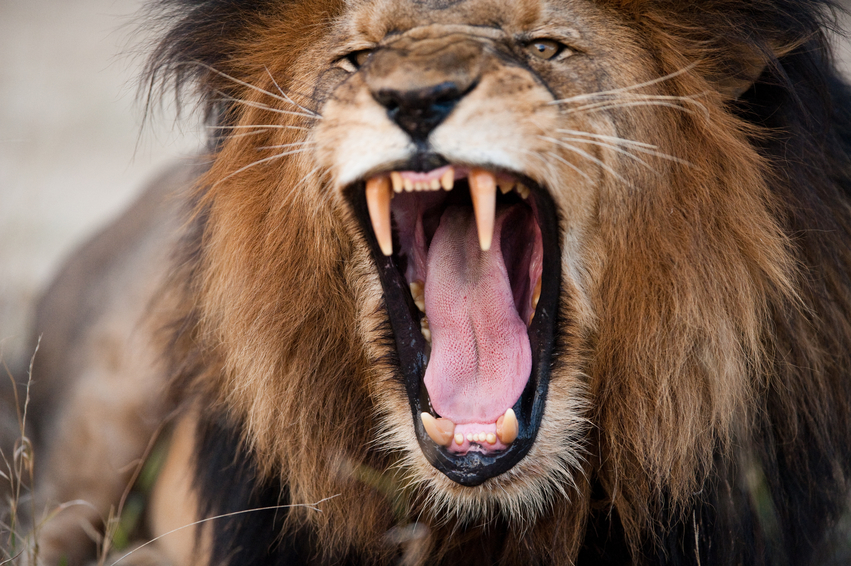Roaringlion - You Have The Message. We Can Deliver It!